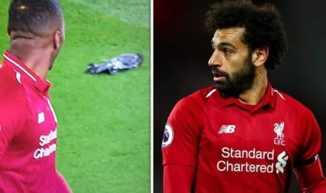 Nghi vấn Salah hạ sát chim khi sút bóng lên trời quá mạnh - 2