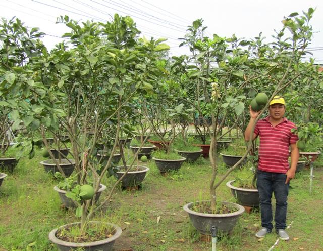 Kỹ sư về trồng chanh móng tay, nhánh bé tý bán 350 ngàn - 1
