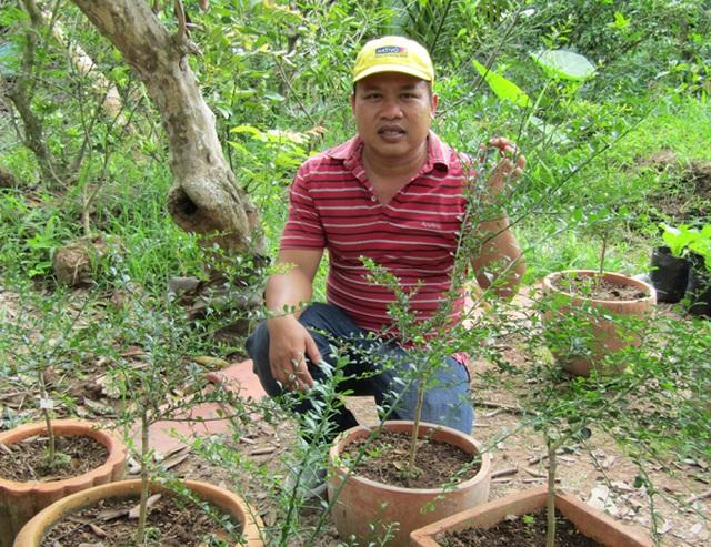 Kỹ sư về trồng chanh móng tay, nhánh bé tý bán 350 ngàn - 2