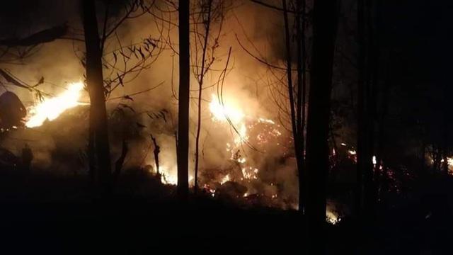 Quảng Ngãi: Rừng keo bốc cháy dữ dội suốt đêm - 1