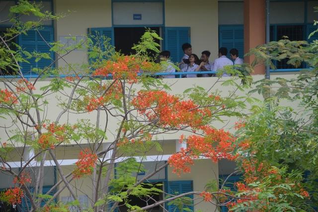 Man mác với mùa hoa học trò nở rộ vào hè - 3