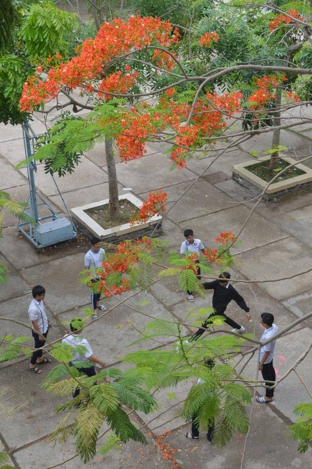 Man mác với mùa hoa học trò nở rộ vào hè - 11