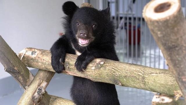 """Ghé thăm nơi """"hồi sinh"""" những cá thể gấu ở Ninh Bình - 10"""