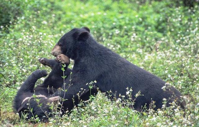 """Ghé thăm nơi """"hồi sinh"""" những cá thể gấu ở Ninh Bình - 5"""