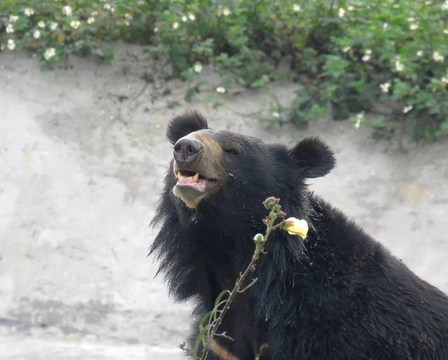 """Ghé thăm nơi """"hồi sinh"""" những cá thể gấu ở Ninh Bình - 8"""