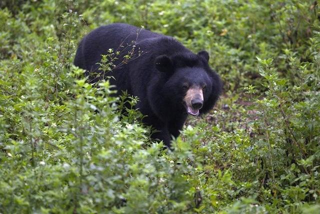 """Ghé thăm nơi """"hồi sinh"""" những cá thể gấu ở Ninh Bình - 4"""