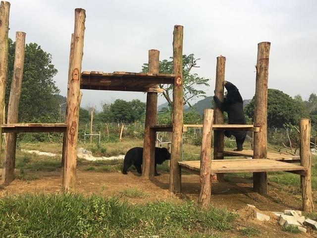 """Ghé thăm nơi """"hồi sinh"""" những cá thể gấu ở Ninh Bình - 7"""