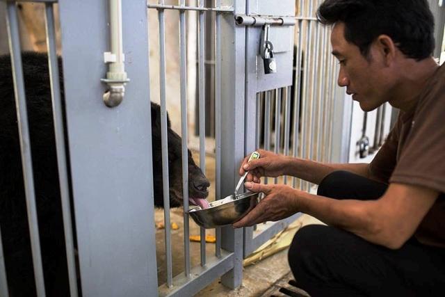 """Ghé thăm nơi """"hồi sinh"""" những cá thể gấu ở Ninh Bình - 9"""