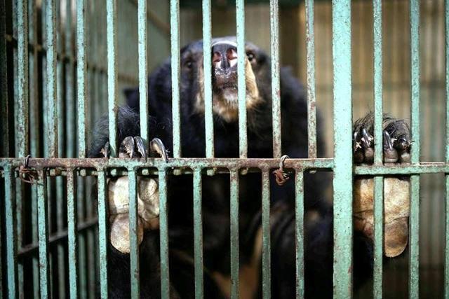 """Ghé thăm nơi """"hồi sinh"""" những cá thể gấu ở Ninh Bình - 2"""