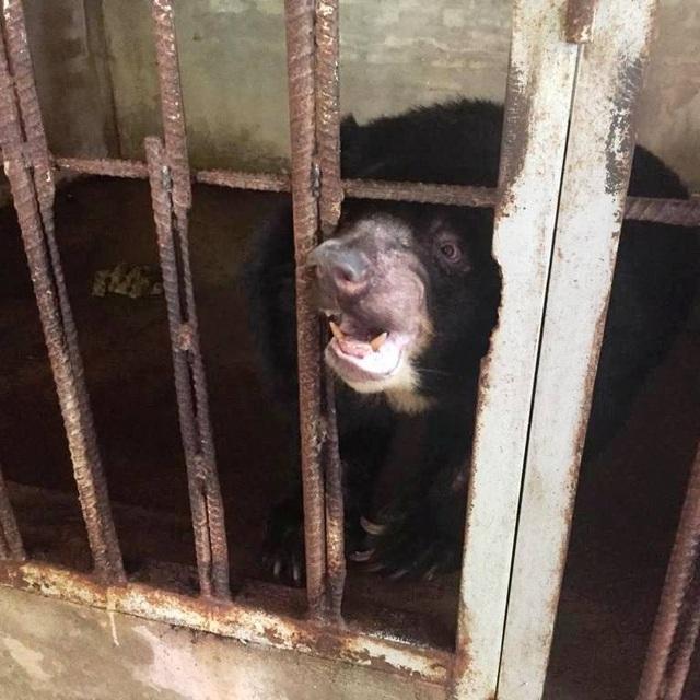 """Ghé thăm nơi """"hồi sinh"""" những cá thể gấu ở Ninh Bình - 3"""