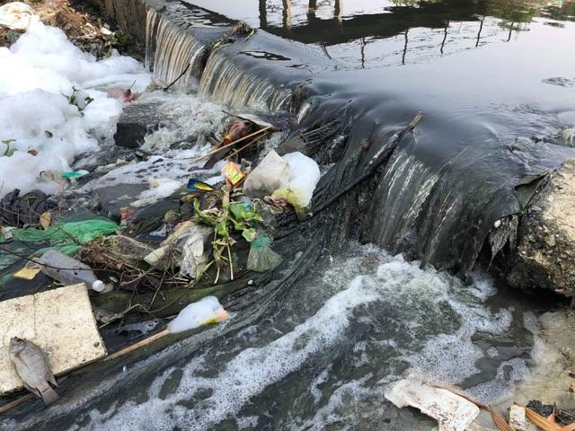 Dead fish, garbage is full of water channels in Danang - 1