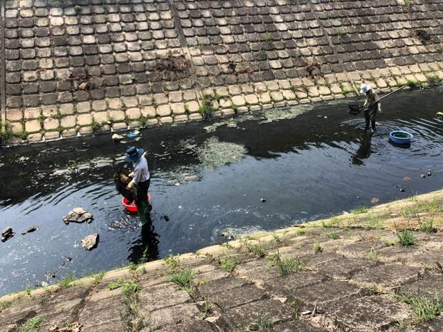 Cá chết, rác thải lại nổi đầy các kênh nước ở Đà Nẵng - 4