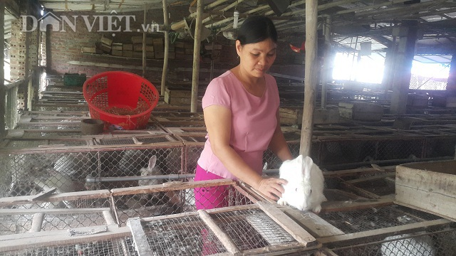 Người đàn bà dựng cơ đồ với ...ngàn con thỏ - 1