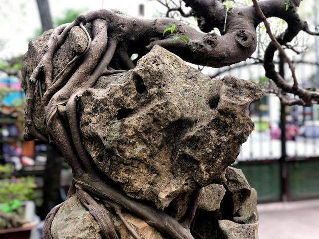 Lấy cây sanh cùi ký vào phiến đá khá khù khoằm, 20 năm sau ra giá nửa tỷ đồng - 12