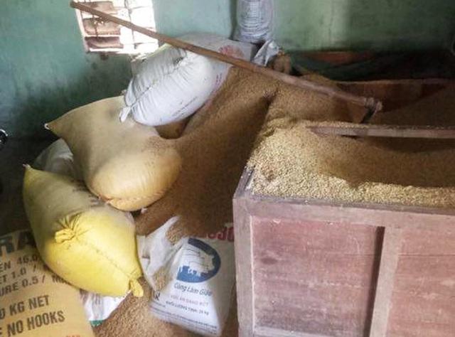 Mất gần 50 lượng vàng trong đống lúa