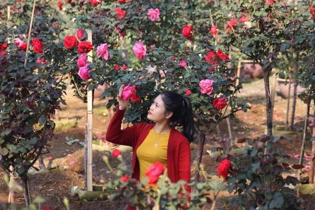 Bỏ việc nhà băng về trồng hoa hồng, 9X Lai Châu kiếm bộn tiền - 5