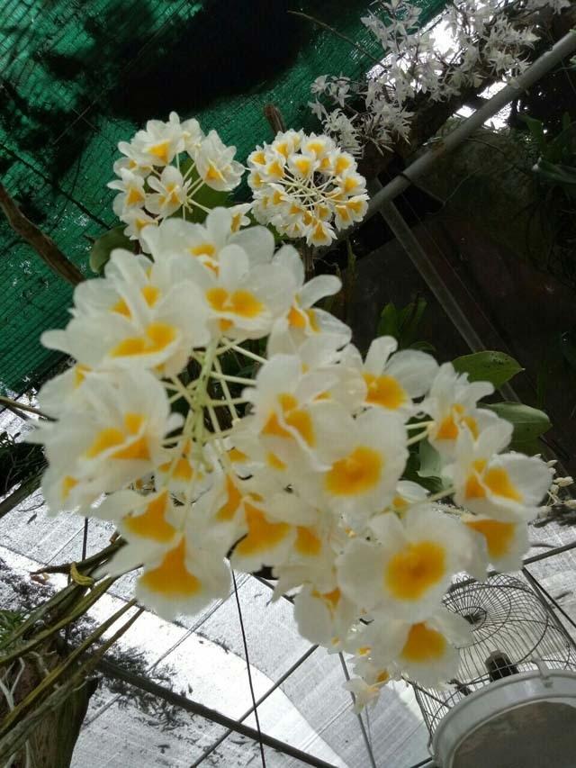 Lạ Thái Nguyên: Vườn lan nhiều loại siêu độc, giá cả chục triệu 1cm - 10