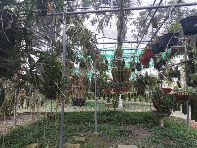 Lạ Thái Nguyên: Vườn lan nhiều loại siêu độc, giá cả chục triệu 1cm - 3