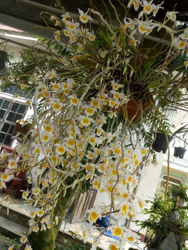 Lạ Thái Nguyên: Vườn lan nhiều loại siêu độc, giá cả chục triệu 1cm - 5