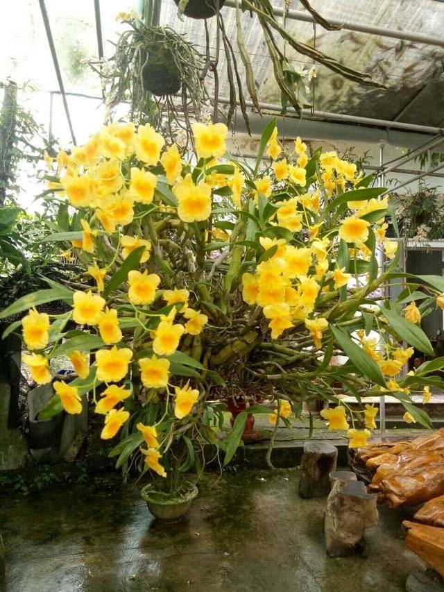 Lạ Thái Nguyên: Vườn lan nhiều loại siêu độc, giá cả chục triệu 1cm - 6