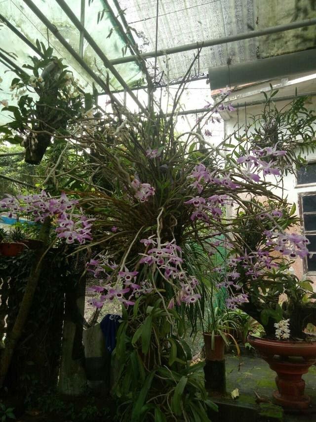Lạ Thái Nguyên: Vườn lan nhiều loại siêu độc, giá cả chục triệu 1cm - 7