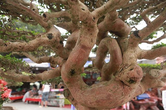 Tuyệt phẩm cây cảnh cứ đụng vào là tỏa hương, giá bán tới 2 tỷ đồng - 13