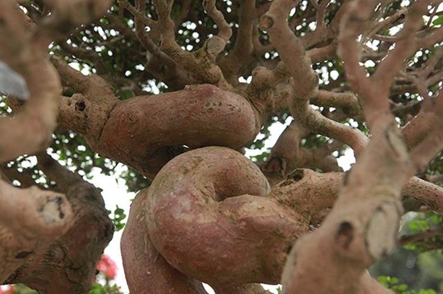 Tuyệt phẩm cây cảnh cứ đụng vào là tỏa hương, giá bán tới 2 tỷ đồng - 8