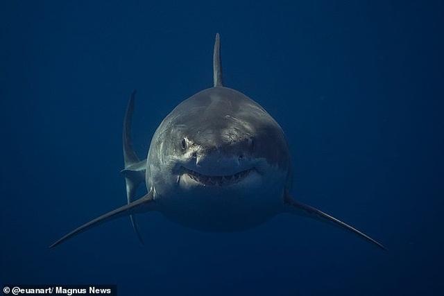 """Bức ảnh gợi nhớ sự kinh hoàng của """"Hàm cá mập"""" - 3"""