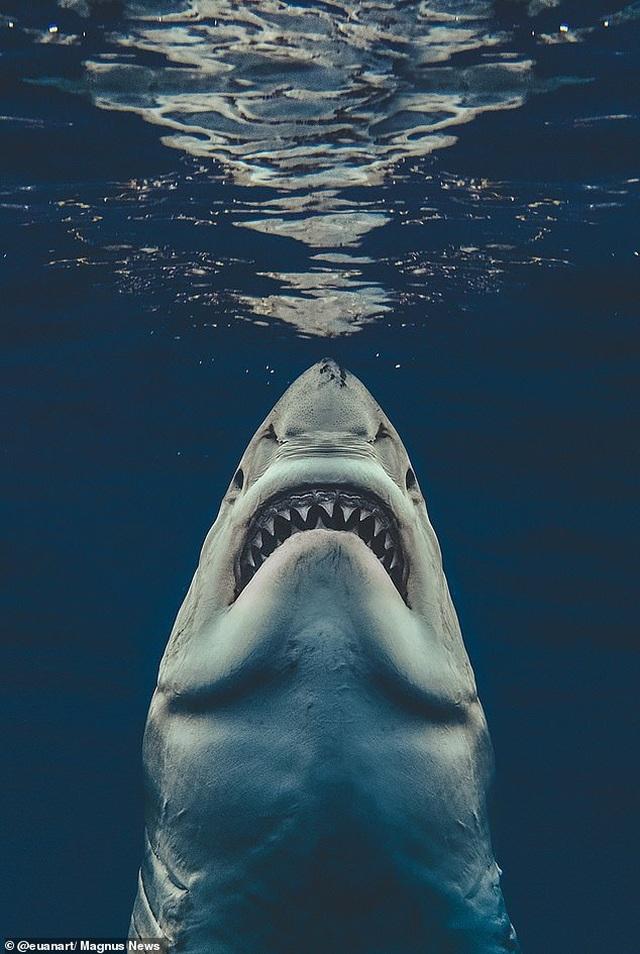 """Bức ảnh gợi nhớ sự kinh hoàng của """"Hàm cá mập"""" - 2"""