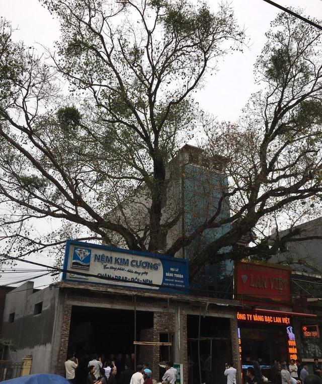 Cả làng kêu cứu vì cây bồ đề hàng trăm tuổi bị xâm hại - 2