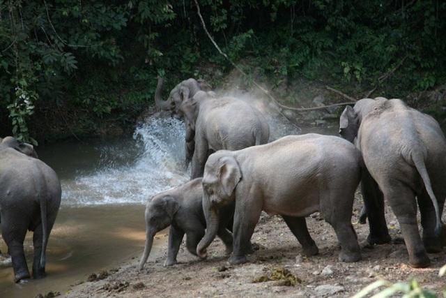 Du khách bị voi húc trọng thương khi cho con đi tiểu ở ven rừng - 1