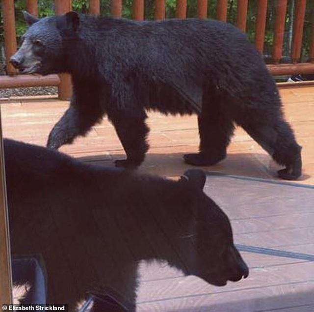 Du khách hết hồn khi thấy gấu đen ngâm mình trong bồn tắm nhà nghỉ - 1