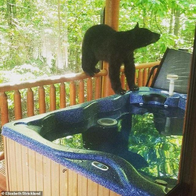 Du khách hết hồn khi thấy gấu đen ngâm mình trong bồn tắm nhà nghỉ - 2