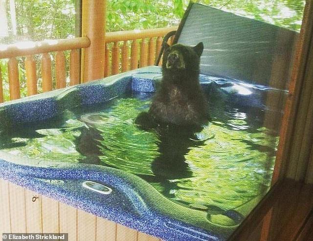 Du khách hết hồn khi thấy gấu đen ngâm mình trong bồn tắm nhà nghỉ - 3