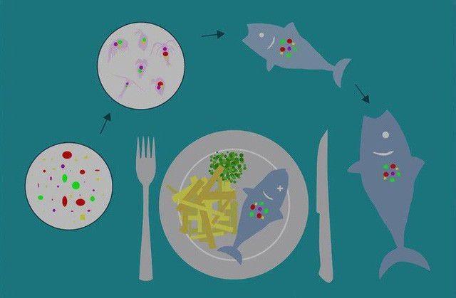 Ecobrick: Cách xử lý rác nhựa khả thi - 6