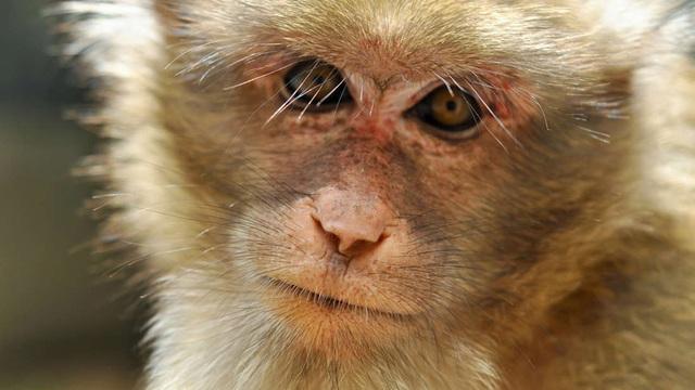 Các nhà khoa học đã có thể sử dụng AI để khám phá não khỉ - 1