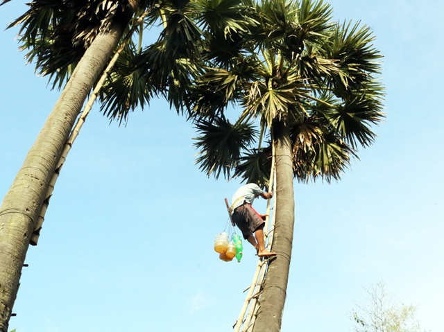 Kiếm tiền triệu từ nghề trèo cây kỳ lạ 20 năm mới ra trái ở An Giang - 2
