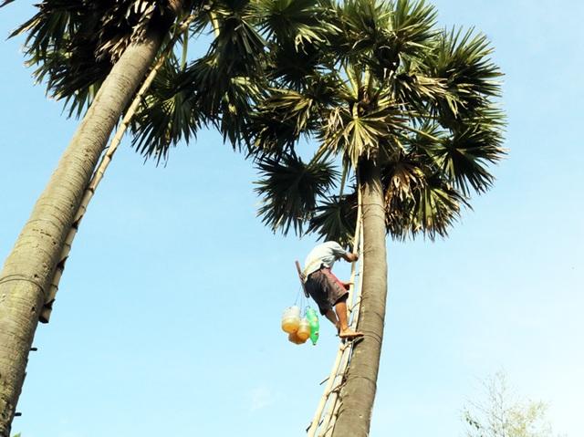 Kiếm tiền triệu từ nghề trèo cây kỳ lạ 20 năm mới ra trái ở An Giang - 7