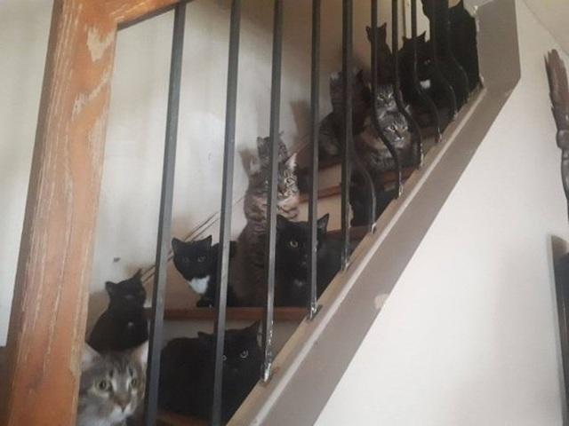 Giải cứu hơn 300 chú mèo bị nhốt trong một căn hộ nhỏ xíu - 5
