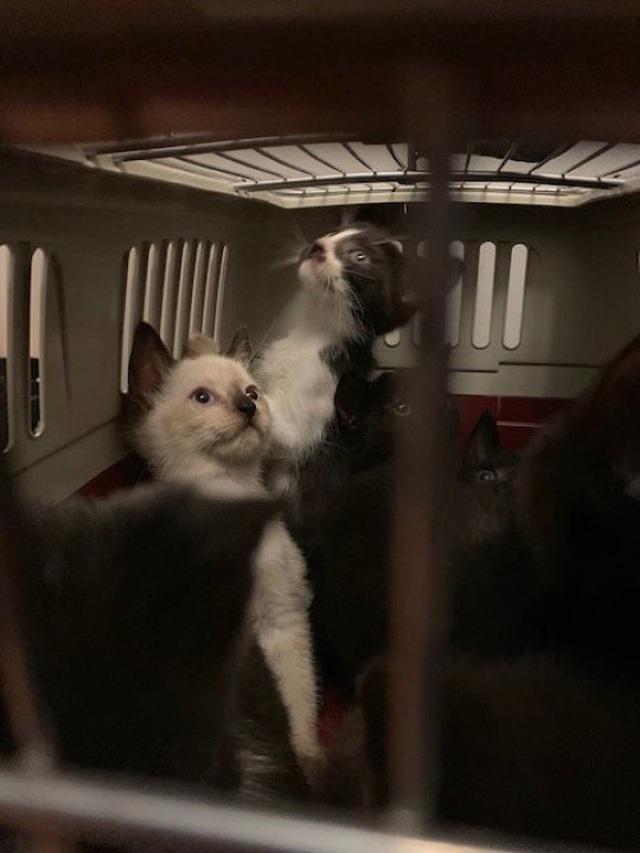 Giải cứu hơn 300 chú mèo bị nhốt trong một căn hộ nhỏ xíu - 6