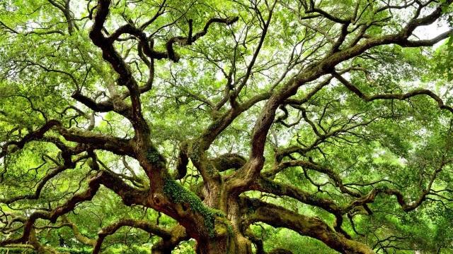 Cần thêm 1 nghìn tỷ cây xanh nữa để giải quyết bài toán CO2! - 1
