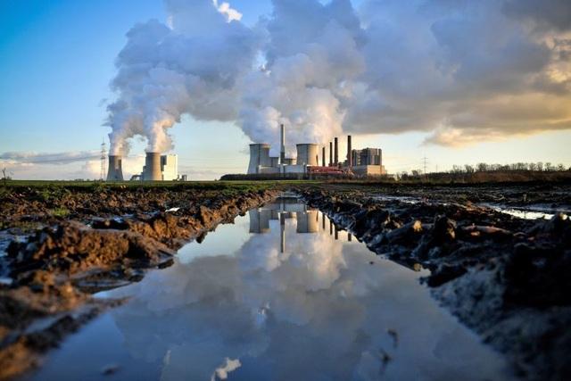 Cần thêm 1 nghìn tỷ cây xanh nữa để giải quyết bài toán CO2! - 2