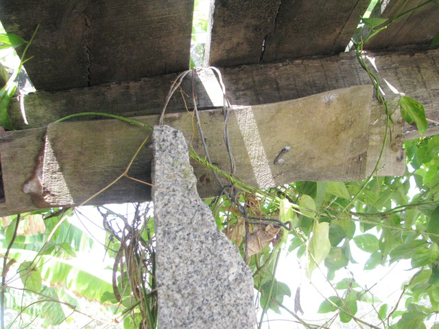 Chênh vênh cầu ván vùng kháng chiến U Minh - Cà Mau - 15