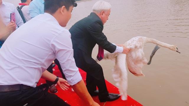 Người dân Hải Phòng đổ xô đi ngắm đàn thiên nga trên sông Tam Bạc - 6