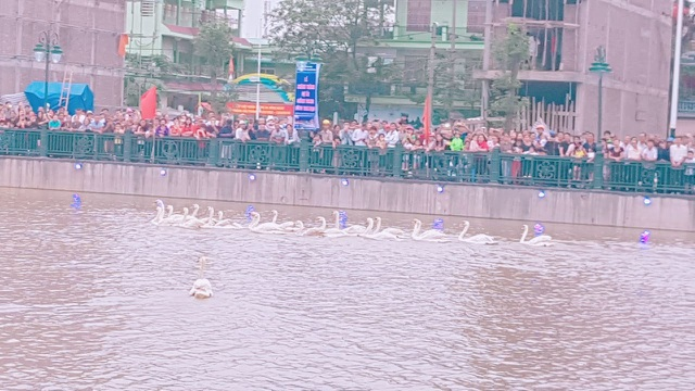 Người dân Hải Phòng đổ xô đi ngắm đàn thiên nga trên sông Tam Bạc - 1