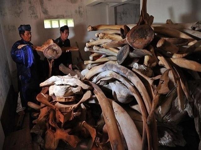 Quảng Ngãi: Phục dựng bộ xương cá voi khủng trên đảo Lý Sơn - 1