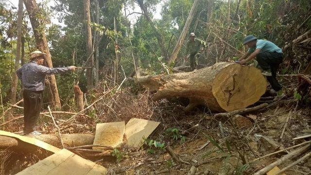 Thành lập Ban Chỉ đạo công tác bảo vệ rừng - 2