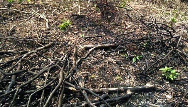 Phạt công ty nguyên liệu TH 40 triệu đồng về tội phá rừng trái phép - 2