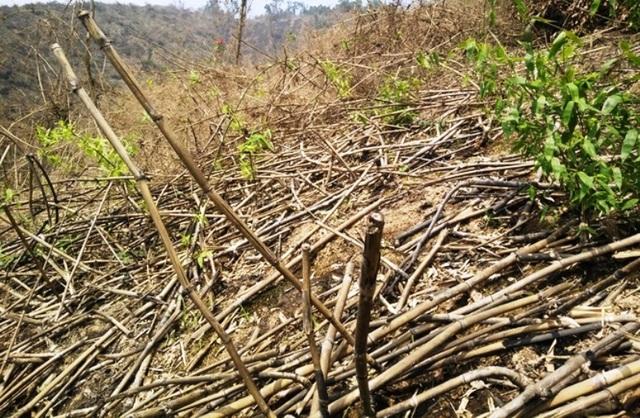 Phạt công ty nguyên liệu TH 40 triệu đồng về tội phá rừng trái phép - 1