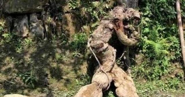 Tình cờ đào được rễ cây hình người, bán hơn trăm triệu tưởng lãi, hóa ra vẫn lỗ - 1